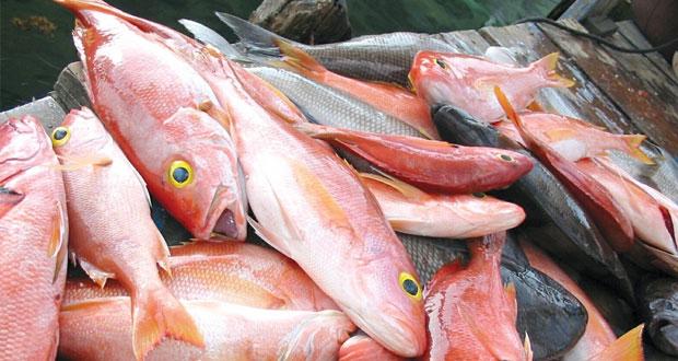 إحصائيات حديثة تكشف عن انخفاض عائدات القطاع السمكي في السلطنة بنسبة 4.5% نهاية سبتمبر الماضي