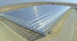 إرنست آند يونج: استخراج النفط المعزز باستخدام الطاقة الشمسية سيوفر فرص عمل تصل إلى 212 ألفا وظيفة في السلطنة