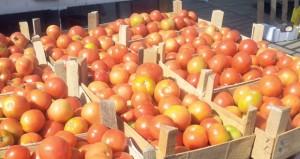 تراجع أسعار المنتجات المحلية بسوق الموالح المركزي