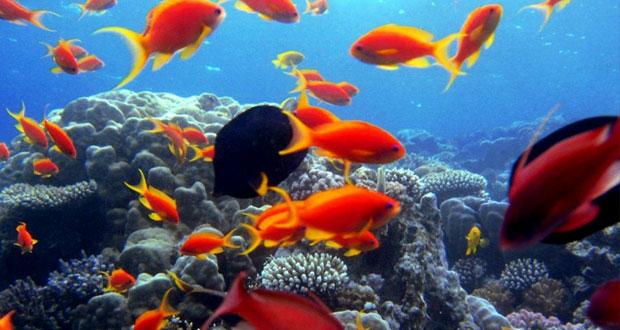 السلطنة تستضيف المؤتمر الدولي حول إدارة مياه التوازن لصالح البيئة البحرية