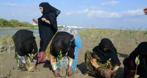 حملة استزراع أشجار القرم بشناص ومعرض بيئي ترفيهي بصحار