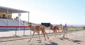 انطلاق فعاليات المهرجان السنوي للهجن الأهلية بميدان صحار