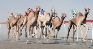 اليوم… انطلق مسابقة المزاينة بميدان الهجانة السلطانية بالفليج