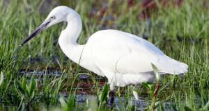 رئيس قسم الأراضي الرطبة بوزارة البيئة : محمية القرم الطبيعية أولى المواقع المنضمة لاتفاقية رامسار في السلطنة