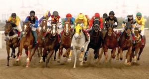 مضمار الفليج يشهد السباق السادس عشر السبت القادم