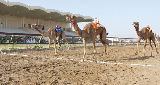 انطلاق السباق الختامي لكأس جلالة السلطان لسباقات الهجن الأهلية بمضمار الفليج ببركاء
