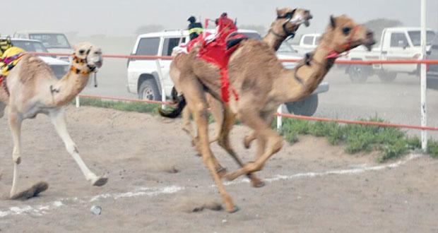 ختام مثير لفعاليات السباق السنوي للهجن الفطايم بميدان طوي الشاوي