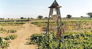 وزارة الزراعة والثروة السمكية تولي اهتماماً كبيراً في المحافظة على الثروة النباتية