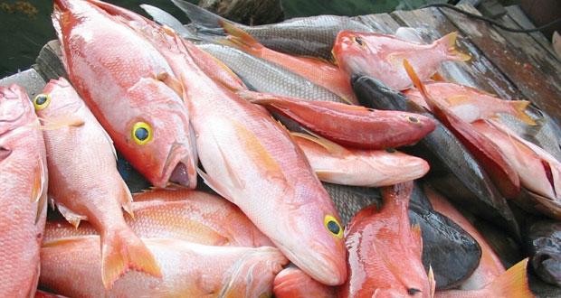 قرار وزاري بحظر تصدير بعض أنواع الأسماك
