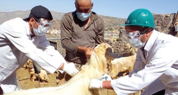 تحصين الثروة الحيوانية بالجبل الأخضر