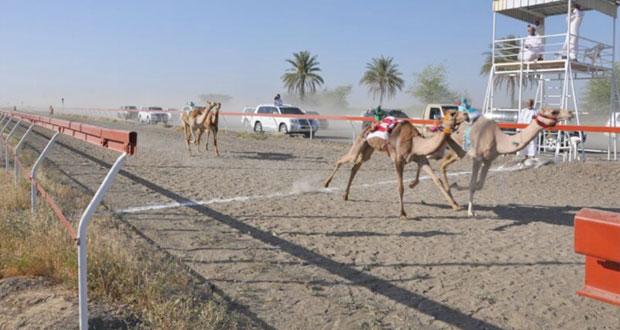9 أشواط مثيرة للهجن الفطايم بميدان سيح الطيبات بولاية صحم للبكار والجعدان
