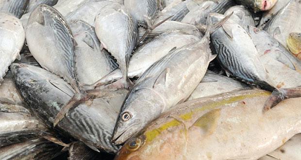 أكثر من 30.5 ألف طن إنتاج ظفار من الأسماك العام الماضي