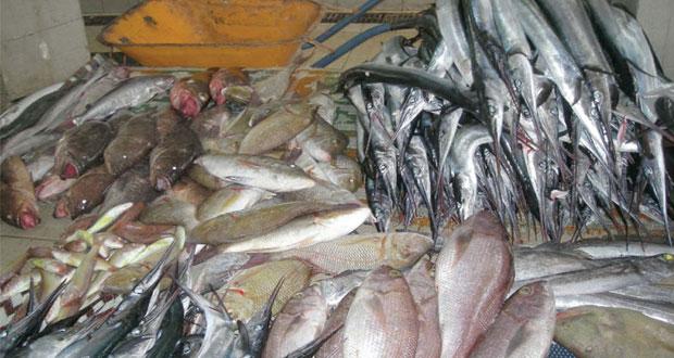 19.8% نسبة نمو إجمالي قيمة الصيد الحرفي في السلطنة بنهاية أبريل الماضي