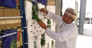 سوق الموالح يستقبل 788 حاوية محملة بـ 15640 طنا من الخضار والفاكهة