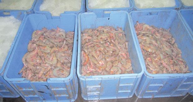 ضبط 2.5 طن من أسماك الروبيان بمحافظة جنوب الشرقية