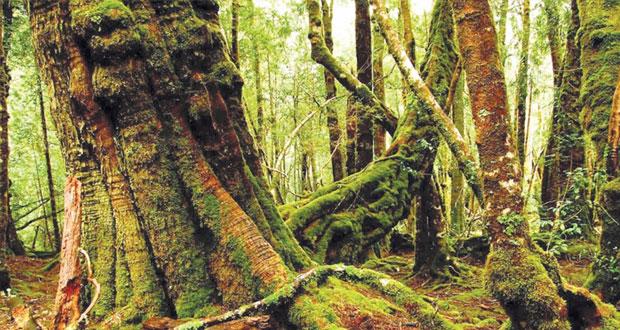 اليونسكو تبقي غابات تسمانيا في قائمة التراث العالمي وترفض طلب استراليا