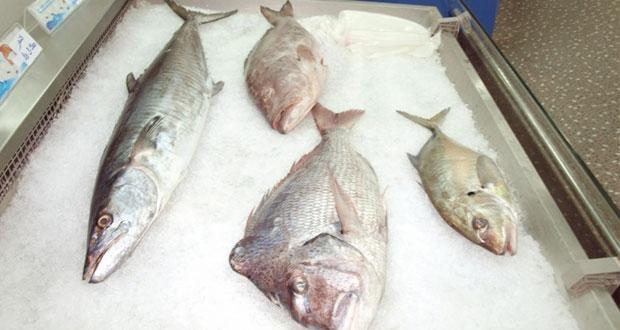 """""""الزراعة"""" والشركات تبدآن بتنفيذ برنامج لتوفير الأسماك في الأسواق المحلية"""