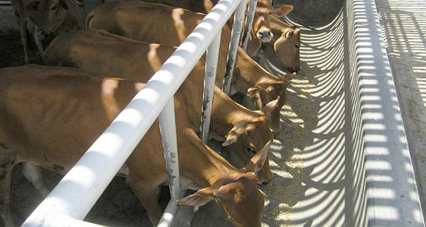 مشاريع تربية الأبقار تلقى دعما وتشجيعا في مختلف ولايات السلطنة
