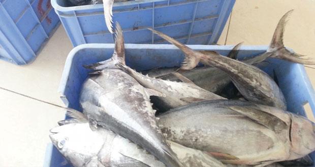 12 ريالا سعر سمك السهوة بجعلان