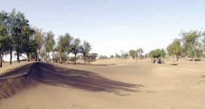 الجزع بولاية المضيبي.. كثبان من الرمال الناعمة على امتداد البصر