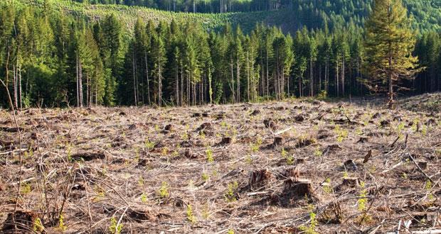 العالم يخسر 112,600 كيلومتر سنويا من الغابات.. وحرائقها تهدد مواردها الطبيعية