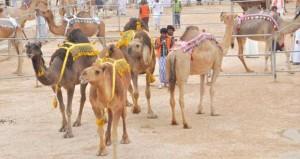 مهرجان ظفار للمزاينة والمحالبة الثاني يواصل فعالياته وسط أجواء الخريف والرذاذ المتواصل