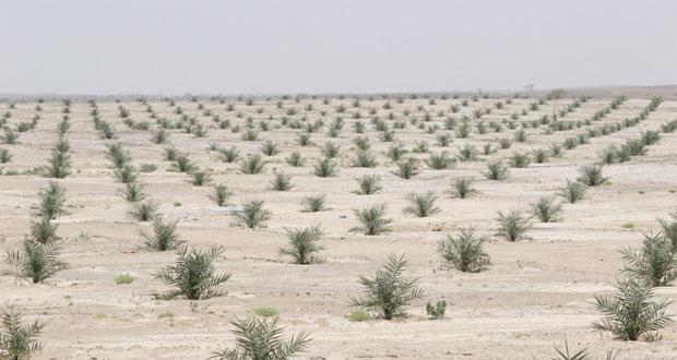 ضمن (مشروع المليون).. زراعة 600 ألف نخلة في عشر مزارع مختلفة