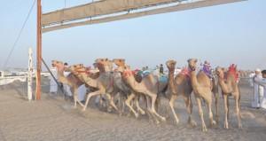 ختام ناجح ومثير لسباق الهجن الفطايم بميدان المشرف بولاية المضيبي