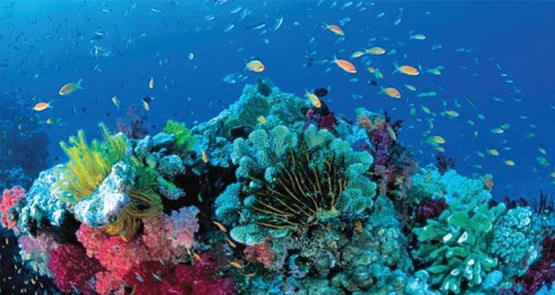 زوال الحاجز المرجاني العظيم يمس الهوية الثقافية للسكان الأصليين في أستراليا
