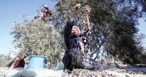 محاكمة 7 مرابطات في الأقصى لصدحهن بـ (التكبير) في وجه الميليشيات