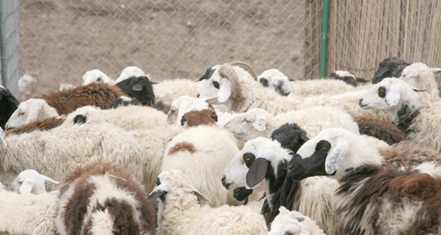 الثروة الحيوانية من القطاعات الحيوية في الاقتصاد الوطني