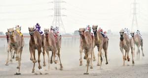 اليوم .. انطلاق فعاليات السباق العام للاتحاد العماني لسباقات الهجن بمضمار الفليج