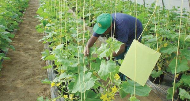 دراسة جديدة حول التنمية المستدامة في القطاع الزراعي