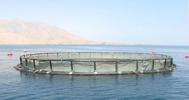 حمد العوفي وكيل (الزراعة والثروة السمكية للثروة السمكية) يتحدث عن مستقبل ومشاريع قطاع الصيد خلال المرحلة القادمة