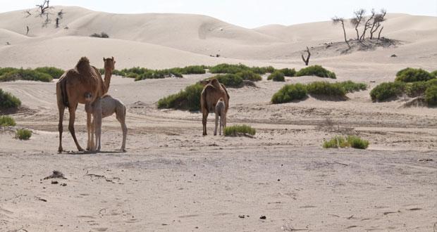 وادي الطوية بجعلان بني بوعلي يتميز بروعة المكان فيه والطبيعة البدوية العمانية