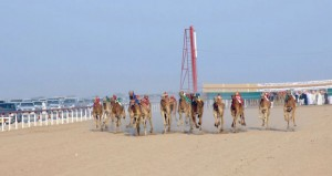 ميدان الأبيض بولاية المضيبي يشهد انطلاقة السباق العاشر للمهرجان السنوي للهجن