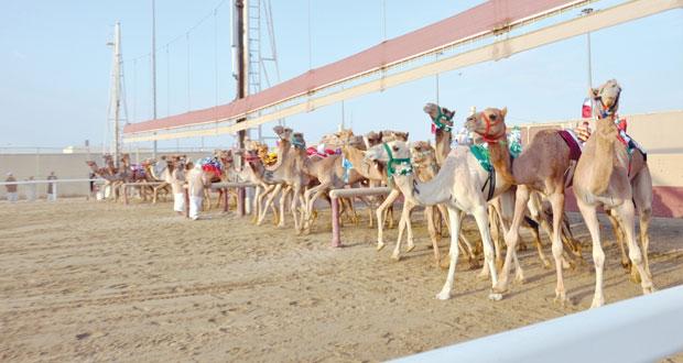 تألق متواصل للهجن العمانية بمهرجان الأمير (الوالد ) بميدان الشحانية بقطر