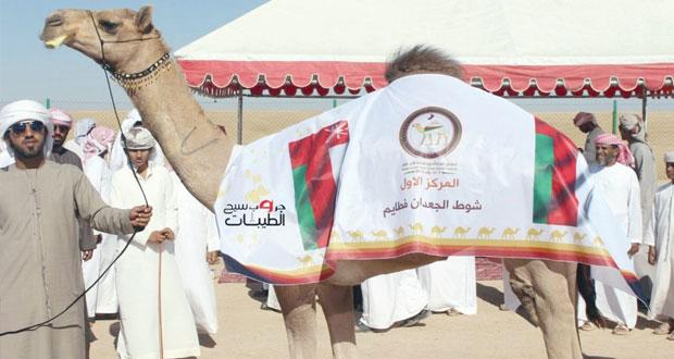 انطلاق فعاليات مهرجان حمراء الدروع لمزاينة الإبل الأول بنيابة حمراء الدروع