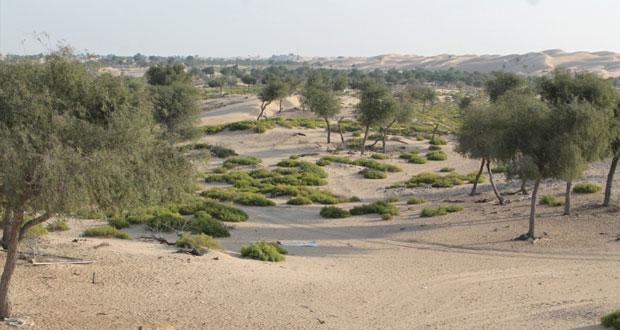 وادي سيحون بجعلان بني بوعلي .. متنفس طبيعي بين الطبيعة الصحراوية وروعة المكان