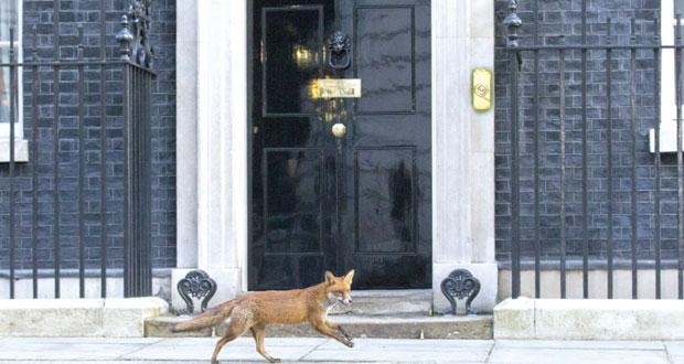بريطانيا: انطلاق حملة الانتخابات التشريعية وسط منافسة شديدة