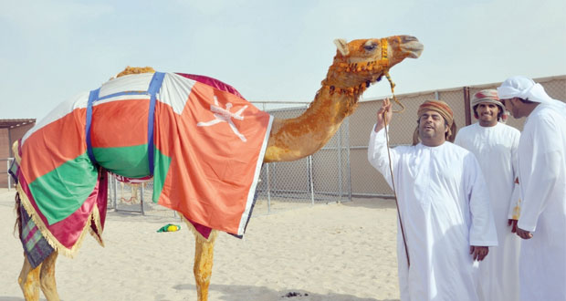 فوز (كيف ) لمحمد بن سالم الوهيبي بأقوى الأشواط بمهرجان أمير قطر للهجن وتنتزع السيف الفضي وجائزة 200 ألف ريال قطري