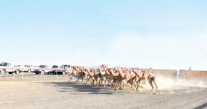 16 شوطا في انطلاقة السباق السنوي للهجن الأهلية بميدان صحار
