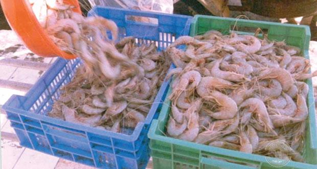 أكثر من 20.9 ألف طن إجمالي الصيد الحرفي بالسلطنة في يناير الماضي