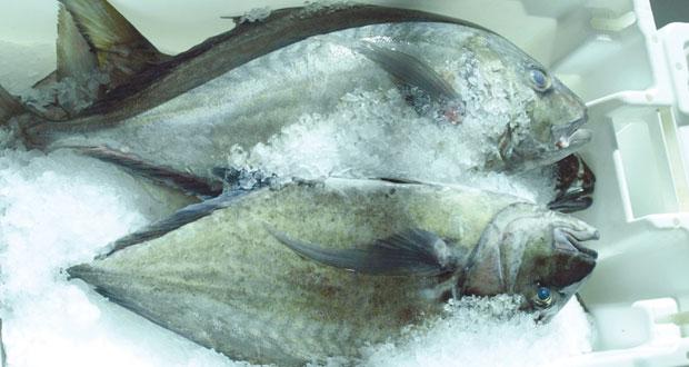 مليون ريال جملة مبيعات الأسماك بالسوق المركزي للأسماك في عام