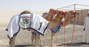 هجن السلطنة تفوز بـ 19 شوطا فى مهرجان خليجنا واحد للهجن الفطايم بميدان المرموم بدبي وتنتزع رموز و 19 سيارة
