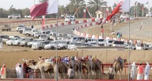 الهجن العمانية تواصل تالقها بمهرجان ختامي الوثبة