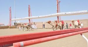 إشادة كبيرة بما حققته الهجن العمانية والمضمرون العمانيون بموسم سباقات 2015م