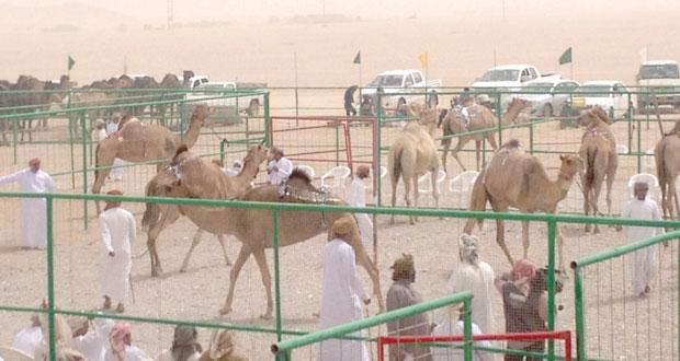 اليوم.. يسدل الستار على مهرجان سباق ظفار السنوي الخامس عشر بولاية ثمريت