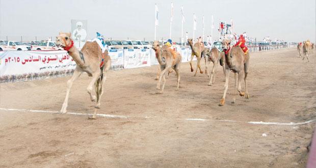 ختام ناجح لسباق مهرجان الأبيض لسباقات الهجن بولاية المضيبي