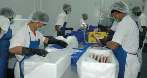 التصنيع السمكي.. استغلال الموارد المتنوعة لتحقيق الأمن الغذائي